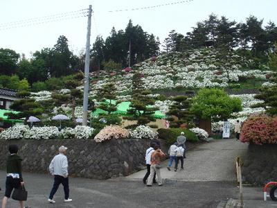 Tsutsujien